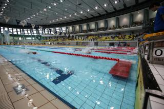 第42回 全国JOCジュニアオリンピックカップ夏季水泳競技大会(2019夏)